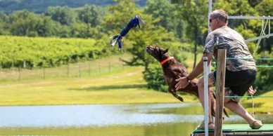 Dog competing in jumping competition
