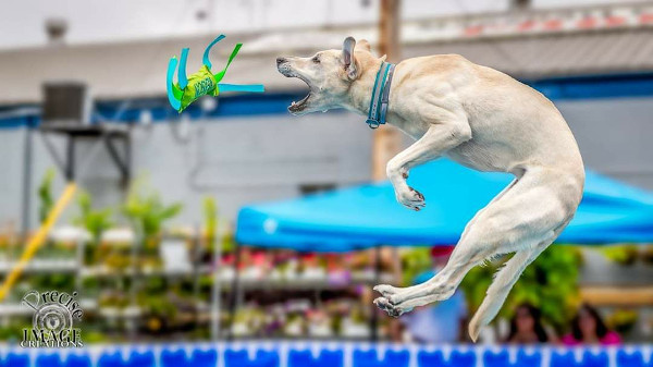 Dock dog jumping