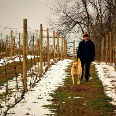Maggie Malick walking dog in vineyard during winter