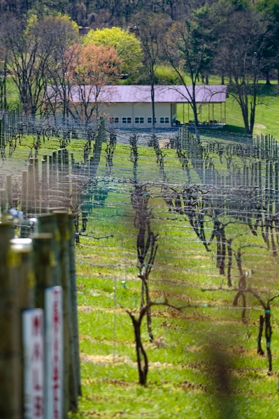 MMWC view from vineyard