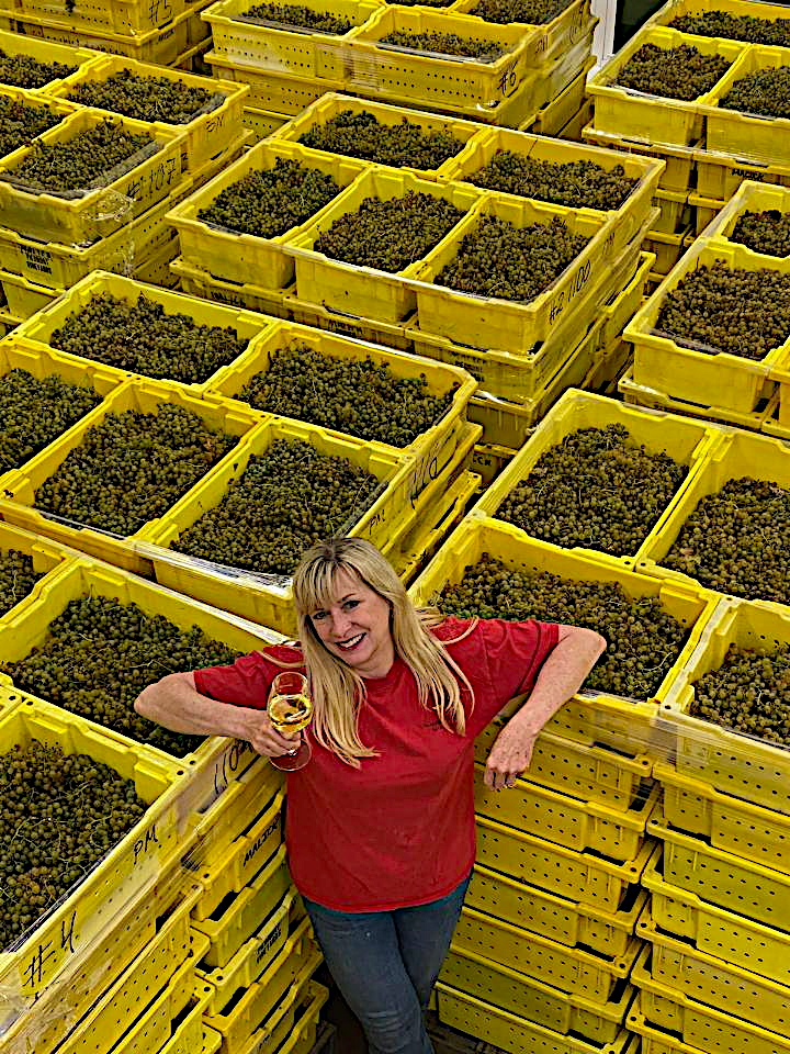 Winemaker with harvested grapes