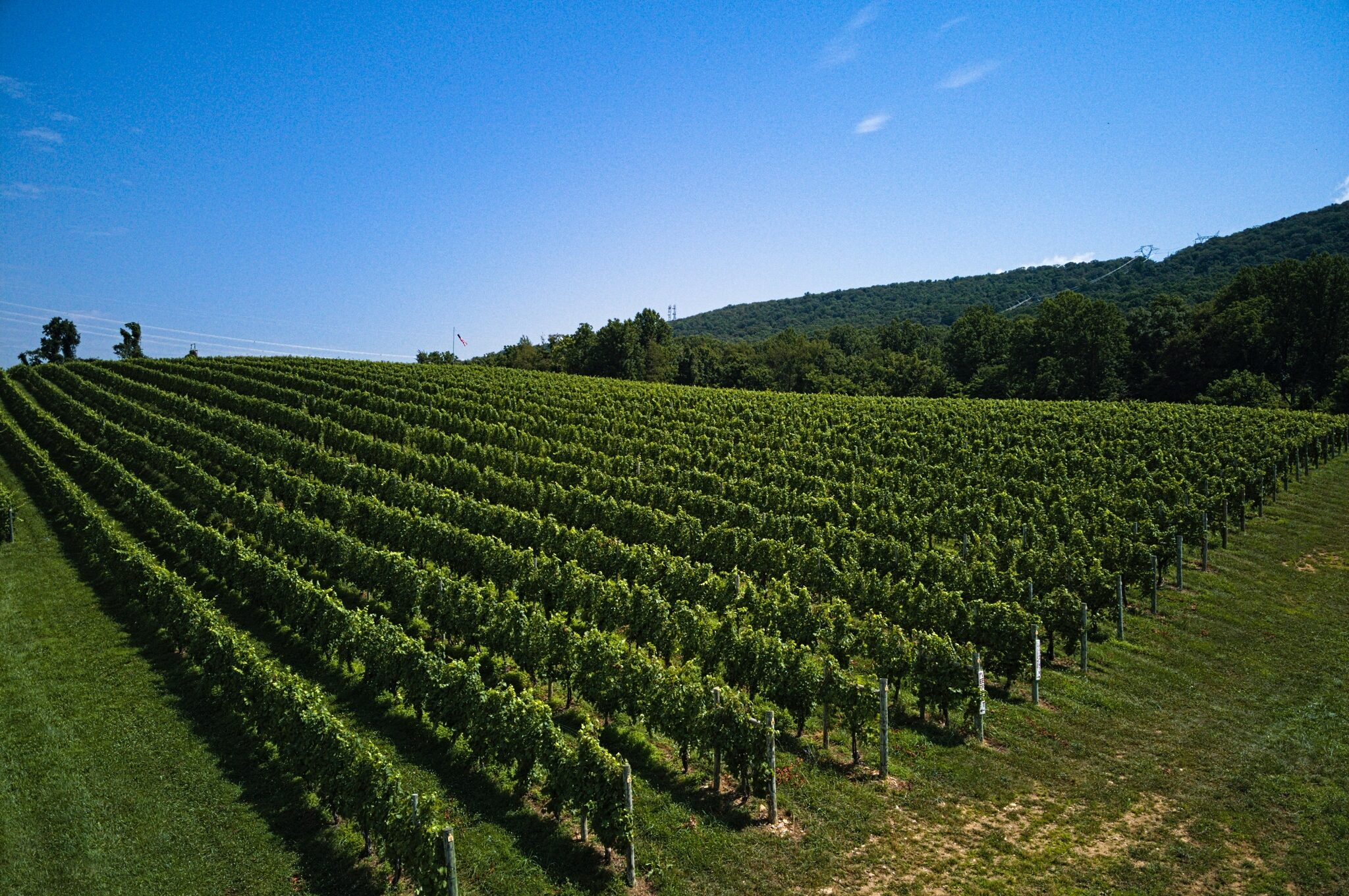 Block 3 Vineyard