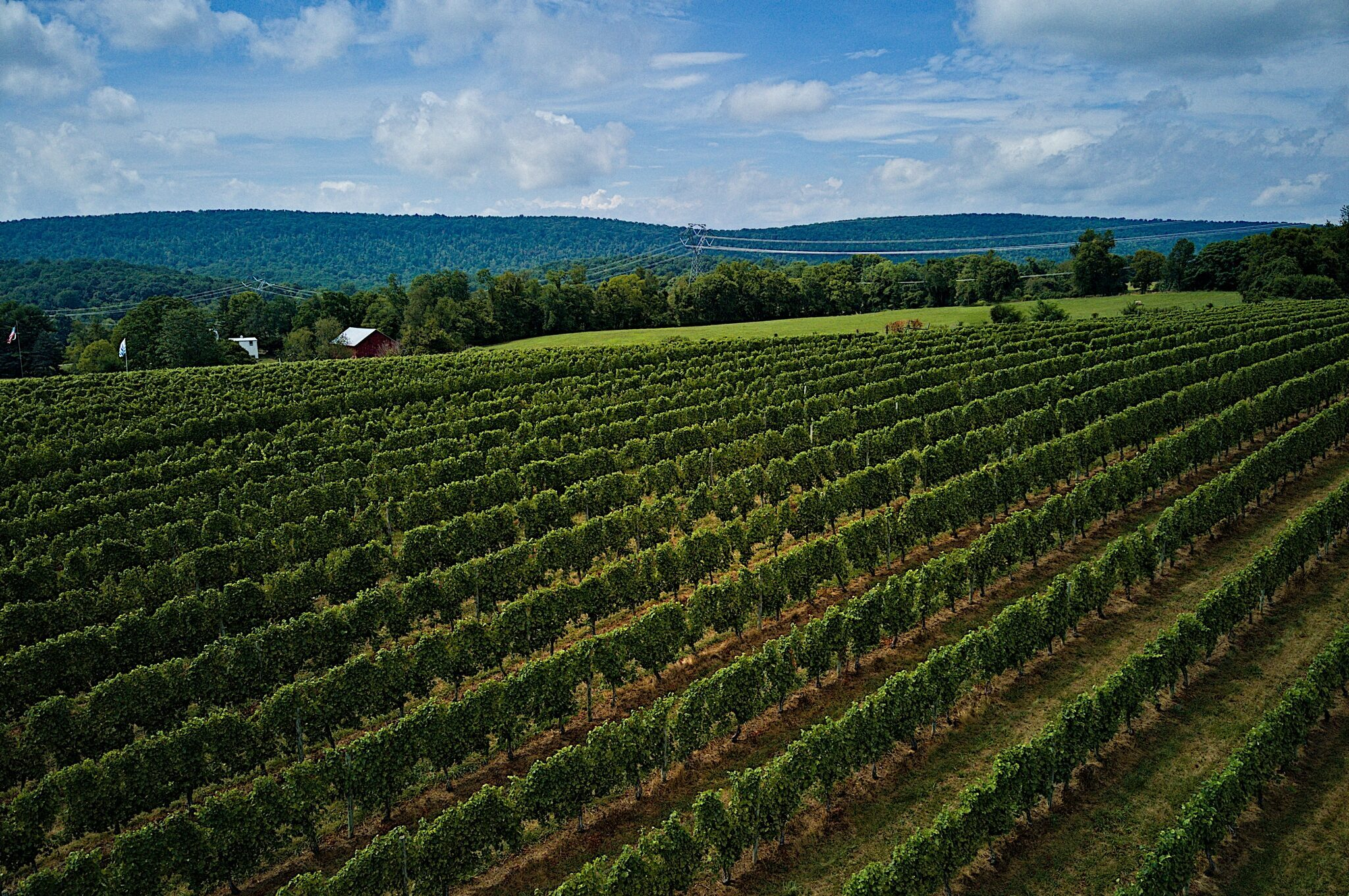 Aerial view of grape vineyard
